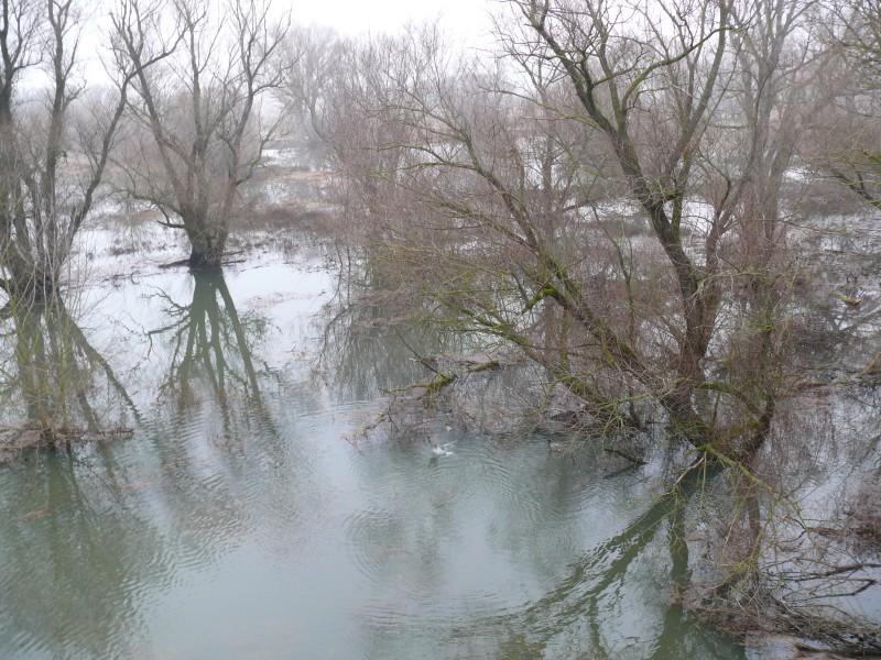 vyliata rieka Morava