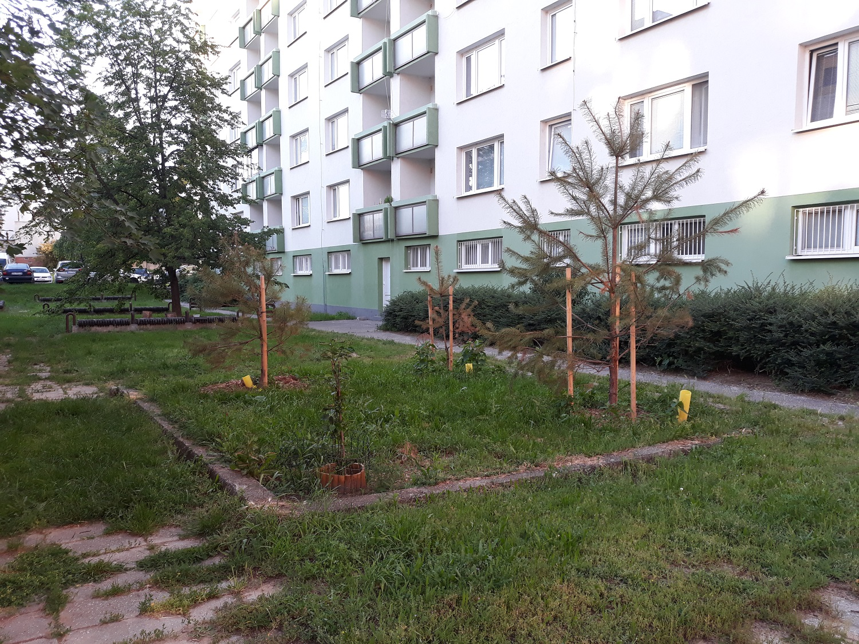 plán výsadby stromov