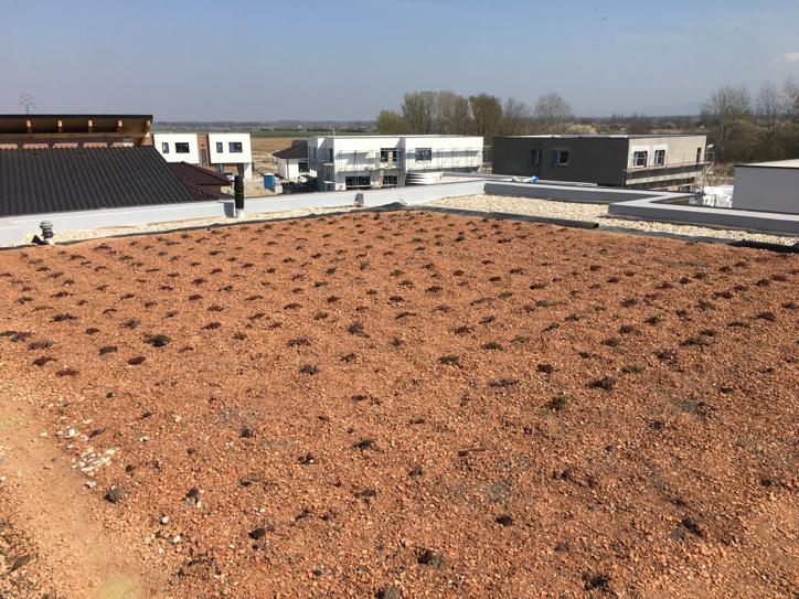 zelenej strechy